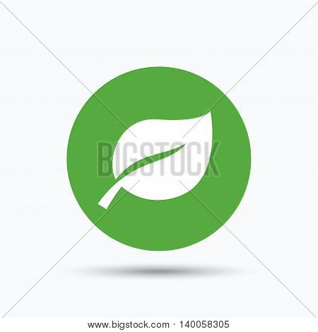 Leaf icon. Fresh organic product symbol. Flat web button with icon on white background. Green round pressbutton with shadow. Vector