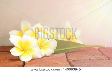 Blooming white Plumeria or Frangipani flowers and green leaf on brick floor. with vintage light effect.