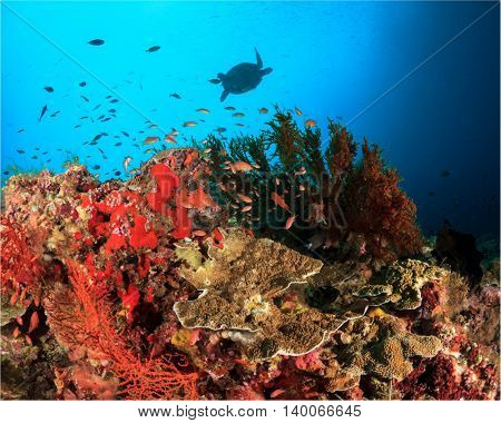 Coral reef underwater with fish and sea turtle