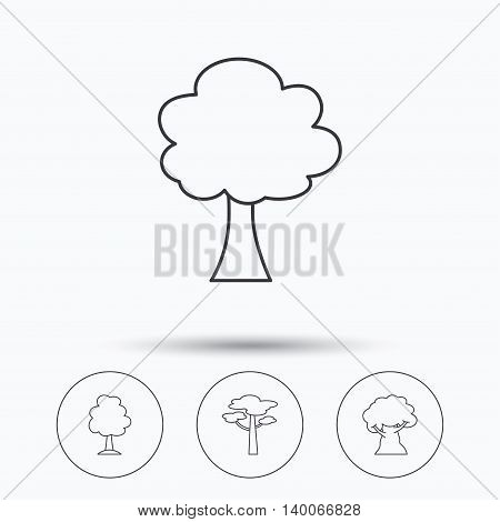 Pine tree, oak-tree icons. Forest trees linear signs. Linear icons in circle buttons. Flat web symbols. Vector