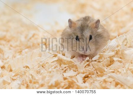 Photographers want to present performances of Hamster