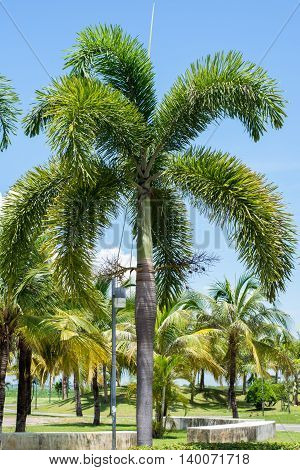 Palm tree in the park, leaf, nature, green,