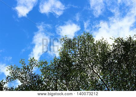 Tree top and branches with blue sky