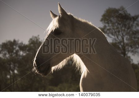 Horse in the paddock during the day