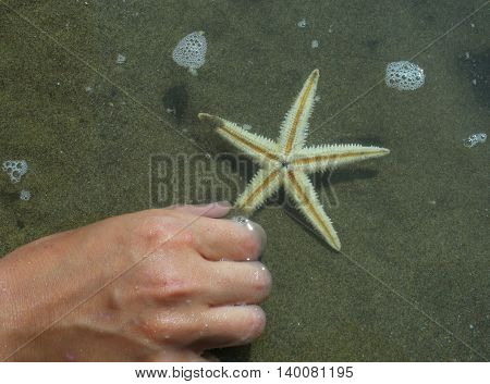 Child Collects A Large Starfish On The Shore