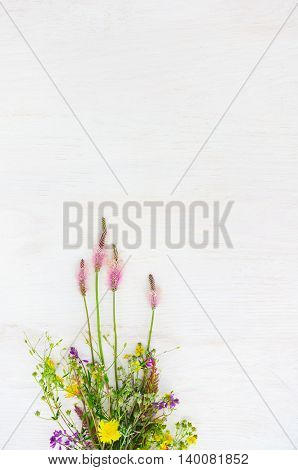 White background with wild colorful flowers, void. Delicate backdrop for greeting card in rustic style.