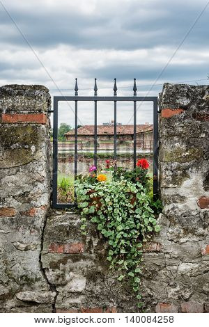 Potted flowering plant and ancient wall with metal grid. Outdoor decoration. Vertical composition.