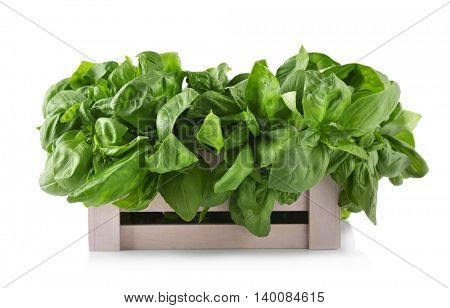 Fresh basil in wooden box, isolated on white