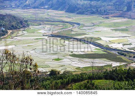 Field rice near Sapa town at Lao Cai province, Vietnam
