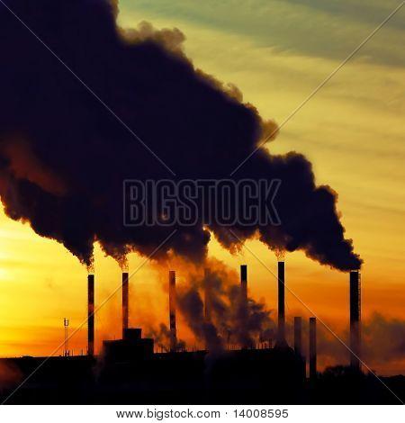 Smoking plant