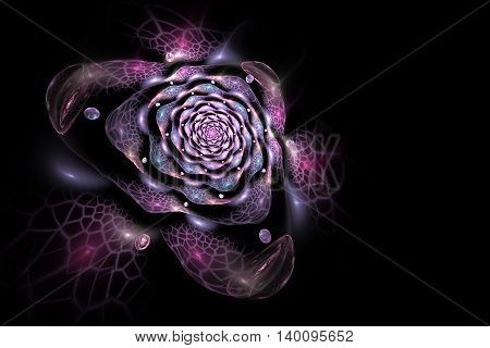 Abstract colorful rose flower on black background. Fantasy pink and purple fractal design for postcards or t-shirts. 3D rendering.