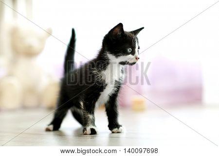 Cute small cat on floor