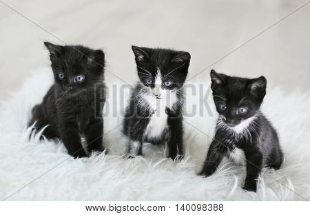 Cute small cats on carpet