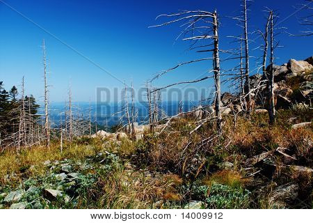 Dead trees in taiga mountains
