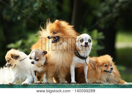 Cute dogs in the park