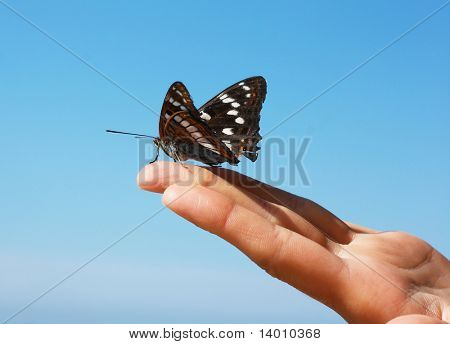 Schmetterling schwarz sitzend auf finger