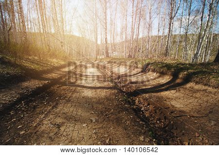 Rural Road In Sunny Forest