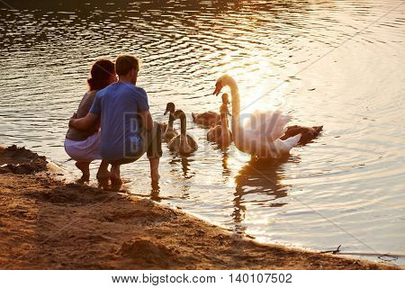 Couple in summer looking at swan in lake with offspring