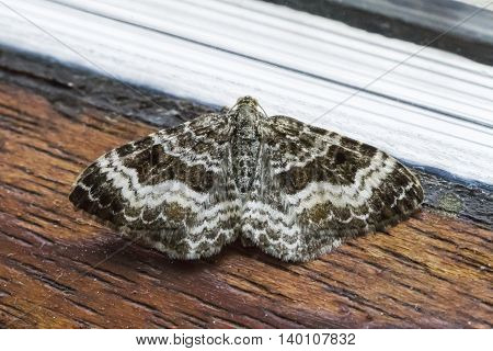 A common carpet is sitting at the window