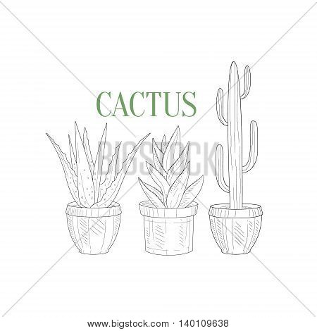 Three Tall Cacti In Pots Hand Drawn Realistic Detailed Sketch In Classy Simple Pencil Style On White Background