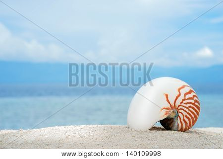 Marine conch of shelfish nautilus on the white sand of tropical beach with turquise sea background at sunny day