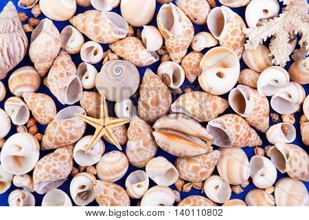 Astract textured background of colorful seashells and starfish