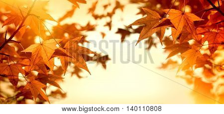 Autumn leaves lit by sunlight, beautiful eve - sun rays lit branch of tree