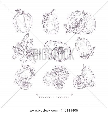 Fresh Vegetables Isolated Hand Drawn Realistic Detailed Sketch In Classy Simple Pencil Style On White Background