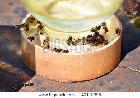 jar of water with bees on it for your design