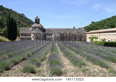Sénanque Abbey with lavender field in France