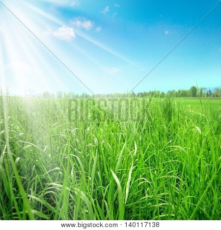 an image of a field