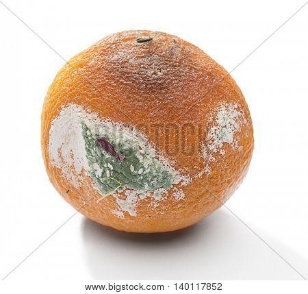 Rotten orange close up isolated on white background.