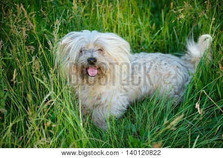 photo of shaggy dog in summer park