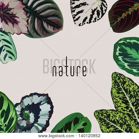 Trendy slogan nature on a gray background in a frame of hand painted begonia leaves. Decorative fashion vector wallpaper