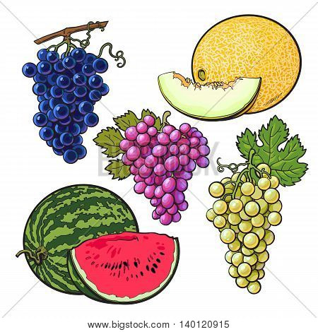Collection of red, green and purple grapes, melon and watermelon, vector illustration isolated on white background. Set of fresh ripe grapes, whole and sliced melon watermelon, juicy summer fruits