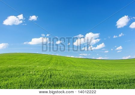 Meadow with green grass and blue sky