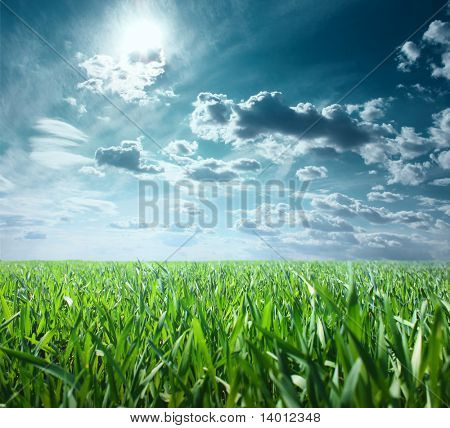 Green grass and sky with clouds and sun