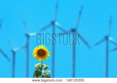 close up shot of sunflower and wind turbines