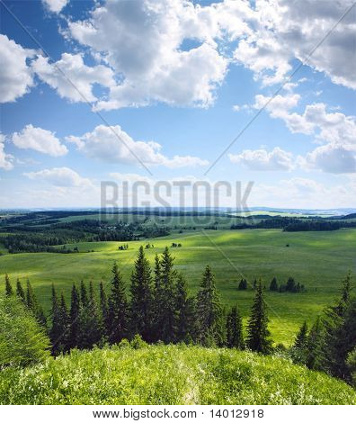Green rural fields and pine trees. View from top of a hill.