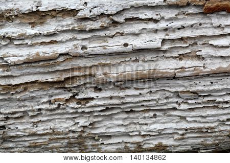 The surface of driftwood as background or texture.