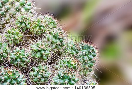 Closeup cactus with selective focus on distance blur background