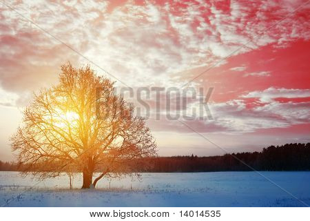 Tree in winter field over sunset light with fairy sky