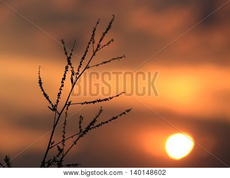 twig on red sunset sky background