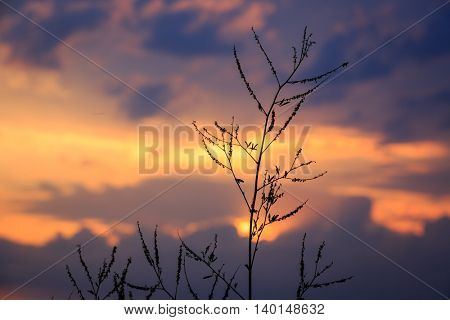 nice evening scene with dry grass on sunset background