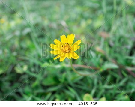 Yellow flower, Spring background with beautiful yellow flower