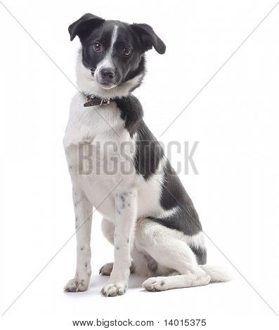 Mongrel cute dog looking to a camera isolated on white