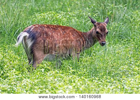 Portrait of a deer in a wildpark