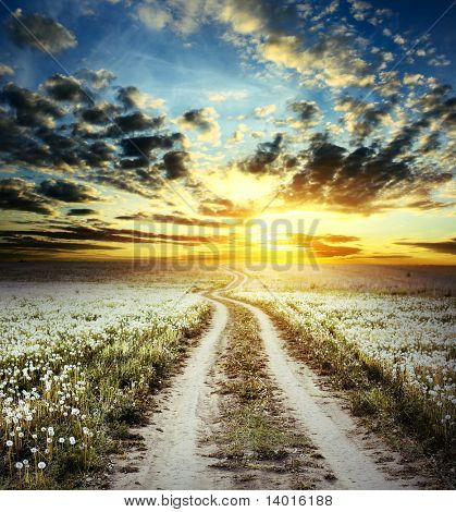 Road in field with dandelions under cloudy sunset light