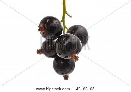 Blackcurrants  fruit vegetarian isolated on white background