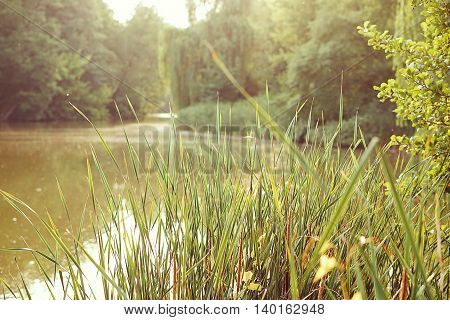 fresh summer green grass in sunlight; sunny pond and forest background